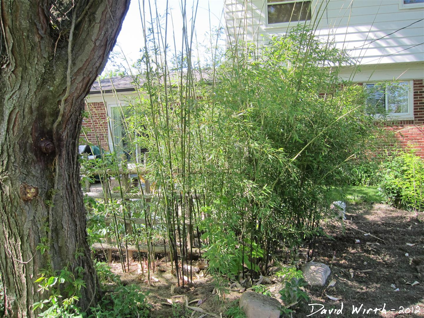 How To Grow Bamboo In Cold Climates Growing Michigan Winter Snow