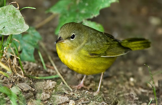 Marie Winn's Central Park Nature News: Another great ...