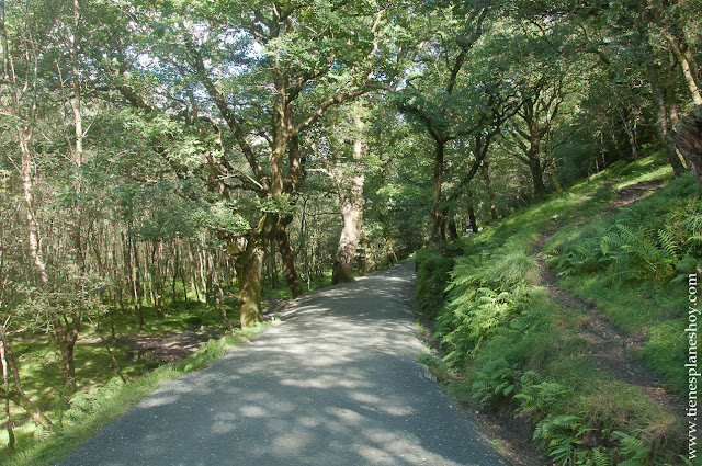 Glendalough camino lago Condado Wicklow Irlanda