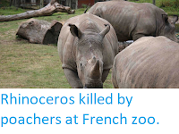 http://sciencythoughts.blogspot.co.uk/2017/03/rhinoceros-killed-by-poachers-at-french.html