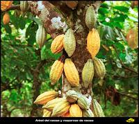 http://www.zchocolat.com/es/the_cocoa_tree.asp