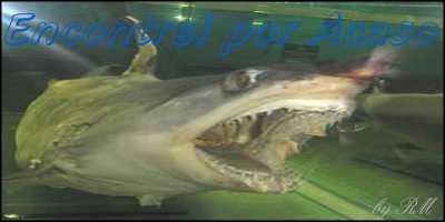 Tubarão do Aquário de São Paulo
