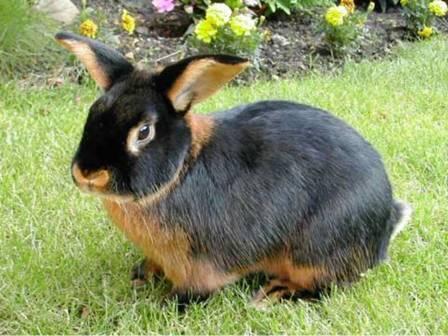 Rabbit In The Web Rabbit Coat Color