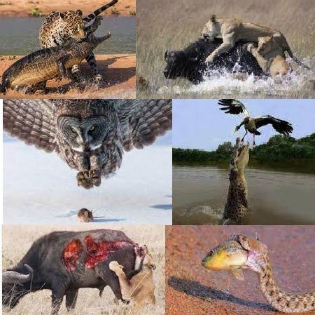 Imágenes Animales Salvajes