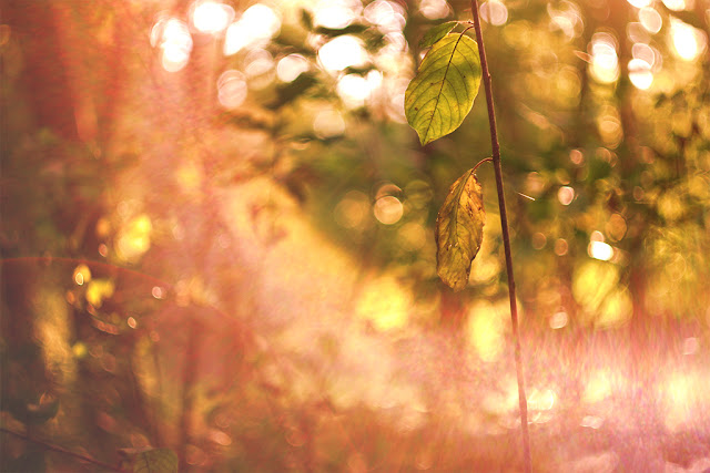 sie robi, jesienny lisc, autumn leafs