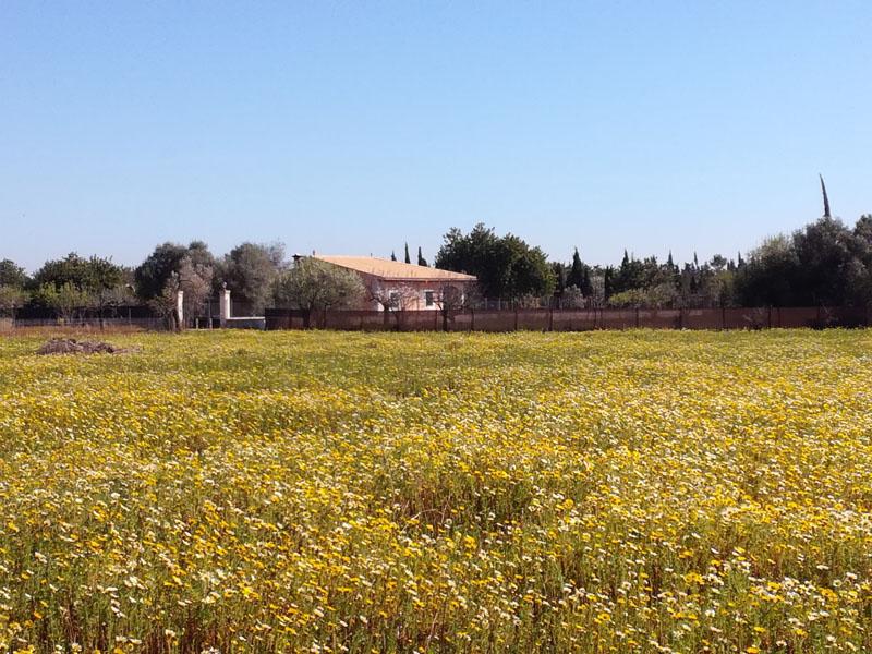 Mallorca in fiore