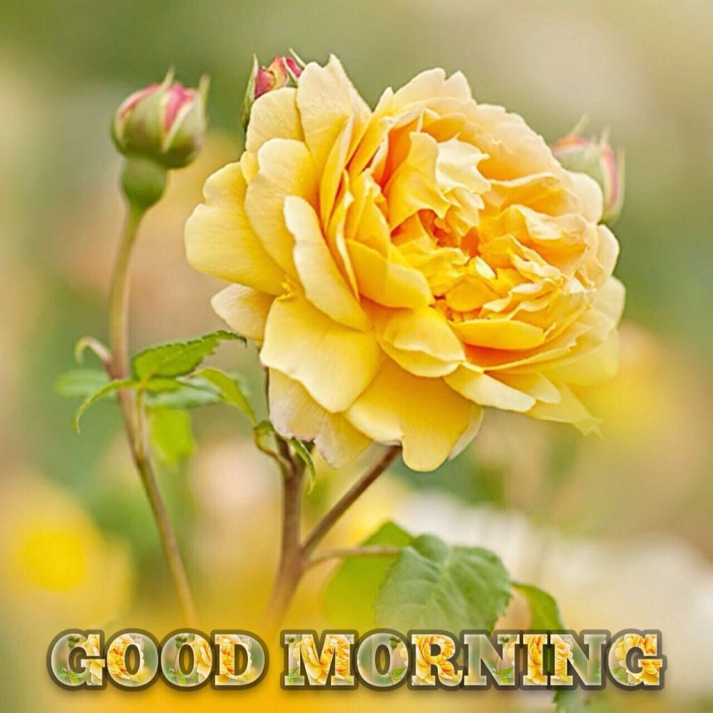 Beautiful Good Morning Pictures For Whatsaap Status