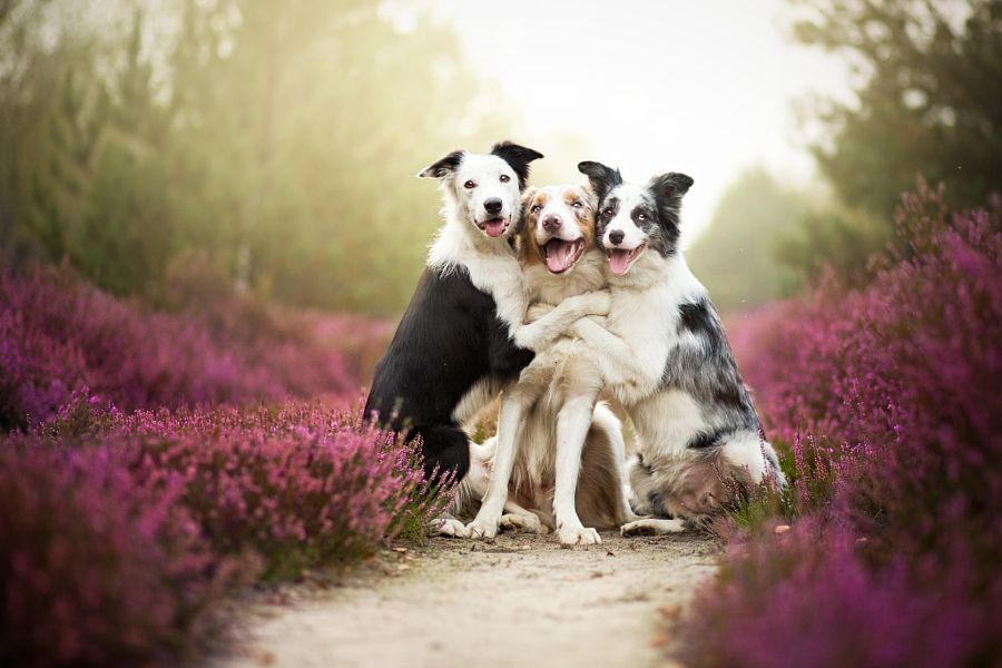 Adorable Pictures of Animals That Are Hugging