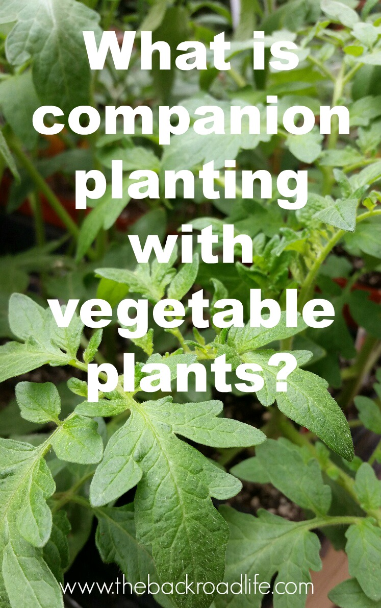 So What Does Companion Planting Mean?