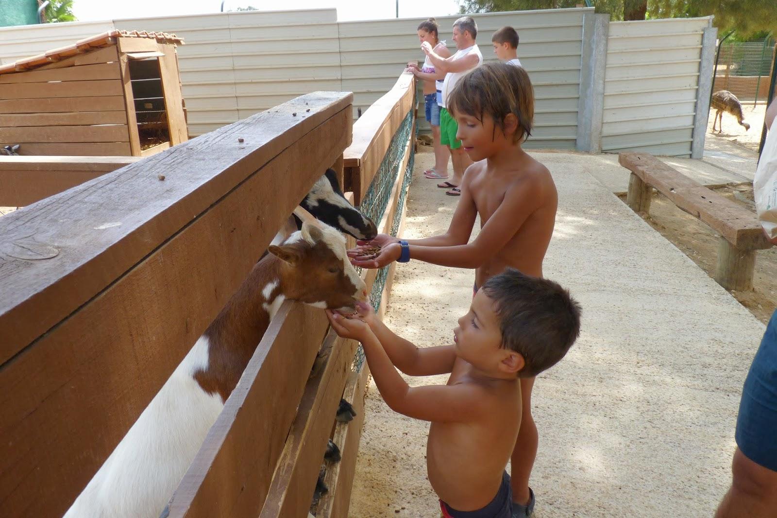 Krazy World, los niños alimentando a los animales.