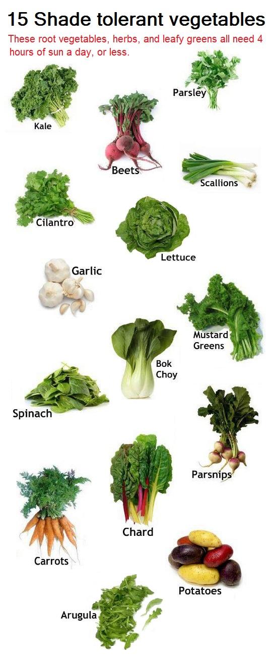 The Backyard Garden 15 Shade Tolerant Vegetables