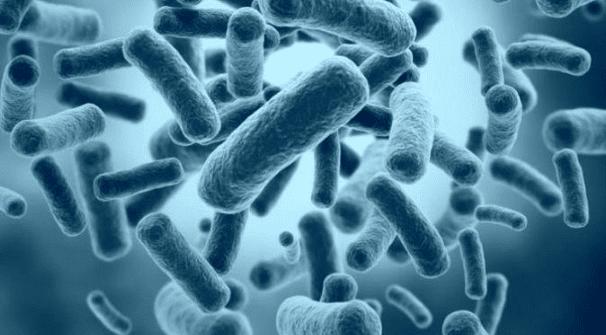 Fakta Bakteri unik