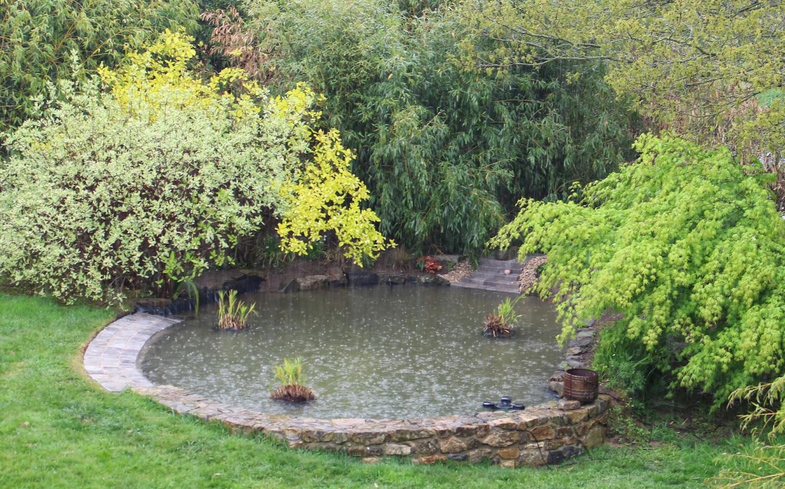 le petit jardin de chlo le nouveau bassin. Black Bedroom Furniture Sets. Home Design Ideas