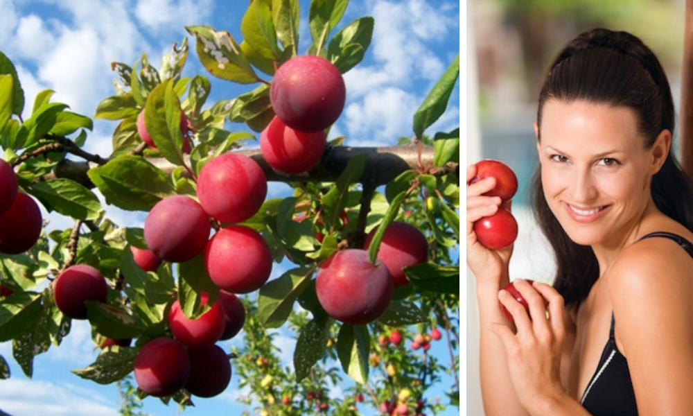 health benefits of plums,benefits of plums,benefits of eating plums,plums benefits,benefits of plums for weight loss,benefits of plums during pregnancy,