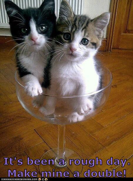 love cat memes - photo #25