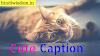 90+ Ideas For Cute Caption