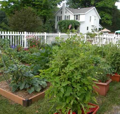 Pams English Cottage Garden Animal Vegetable Miracle