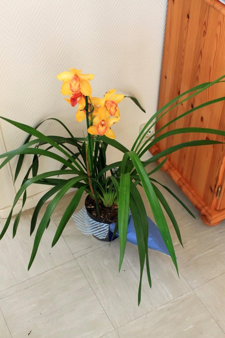 les orchid es de micha a n 39 arr te pas. Black Bedroom Furniture Sets. Home Design Ideas