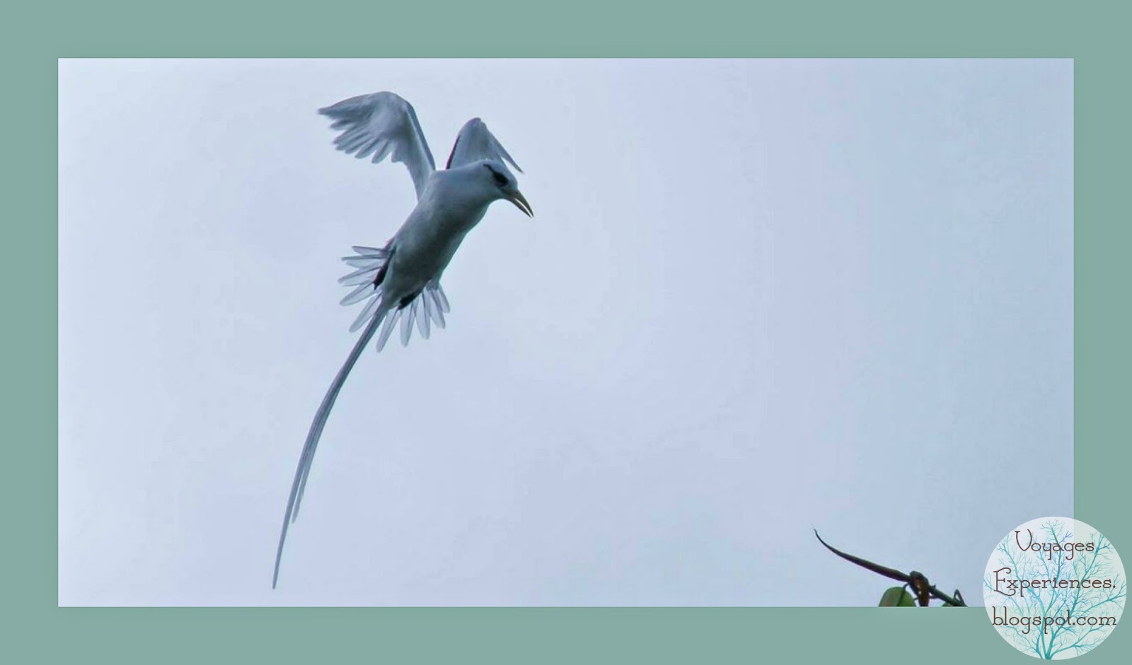 Voyages Et Experiences Oiseaux De L Ile Maurice