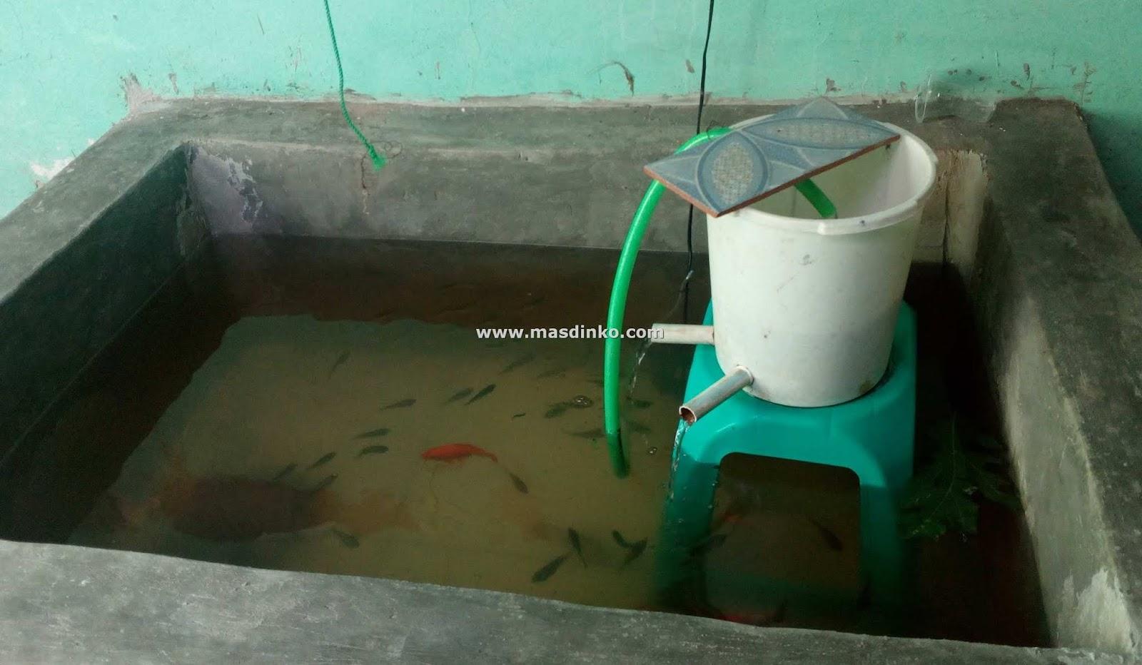 Cara Membuat Kolam Mini Pembesaran Ikan Nila Di Dalam Rumah Masdinko Com