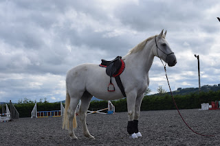 White horse standing, looking into the distance waiting to be lunged in a outdoor school