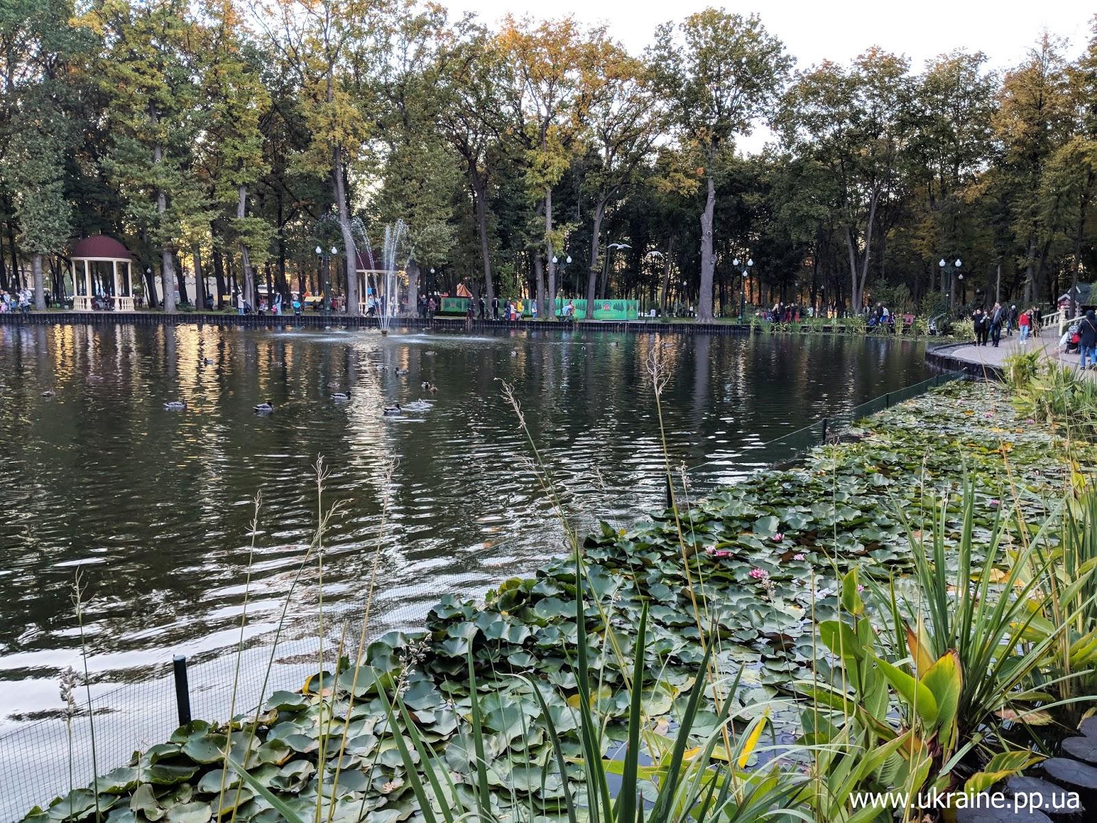 Лилии на озере в парке имени Горького