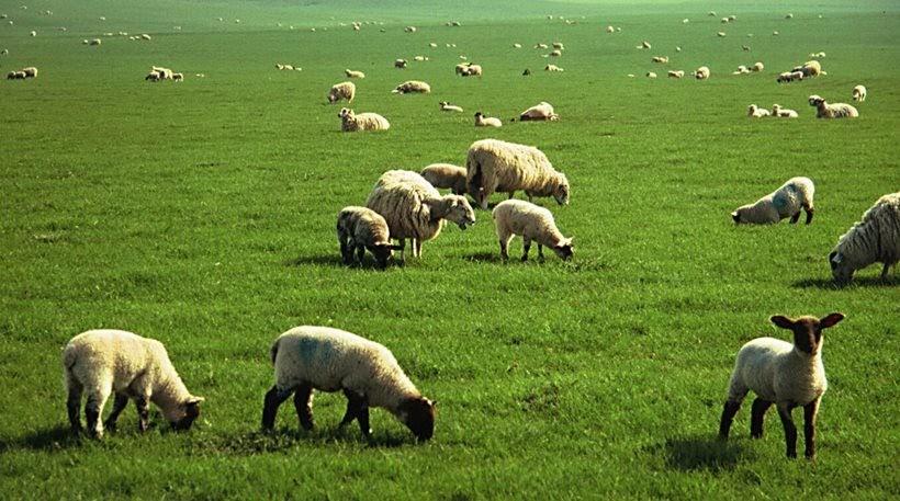 Ενισχύσεις 5,6 εκατ. ευρώ Βιολογικής Κτηνοτροφίας για τους Θεσσαλούς παραγωγούς