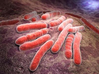 Berapa Lama Penyembuhan TB?