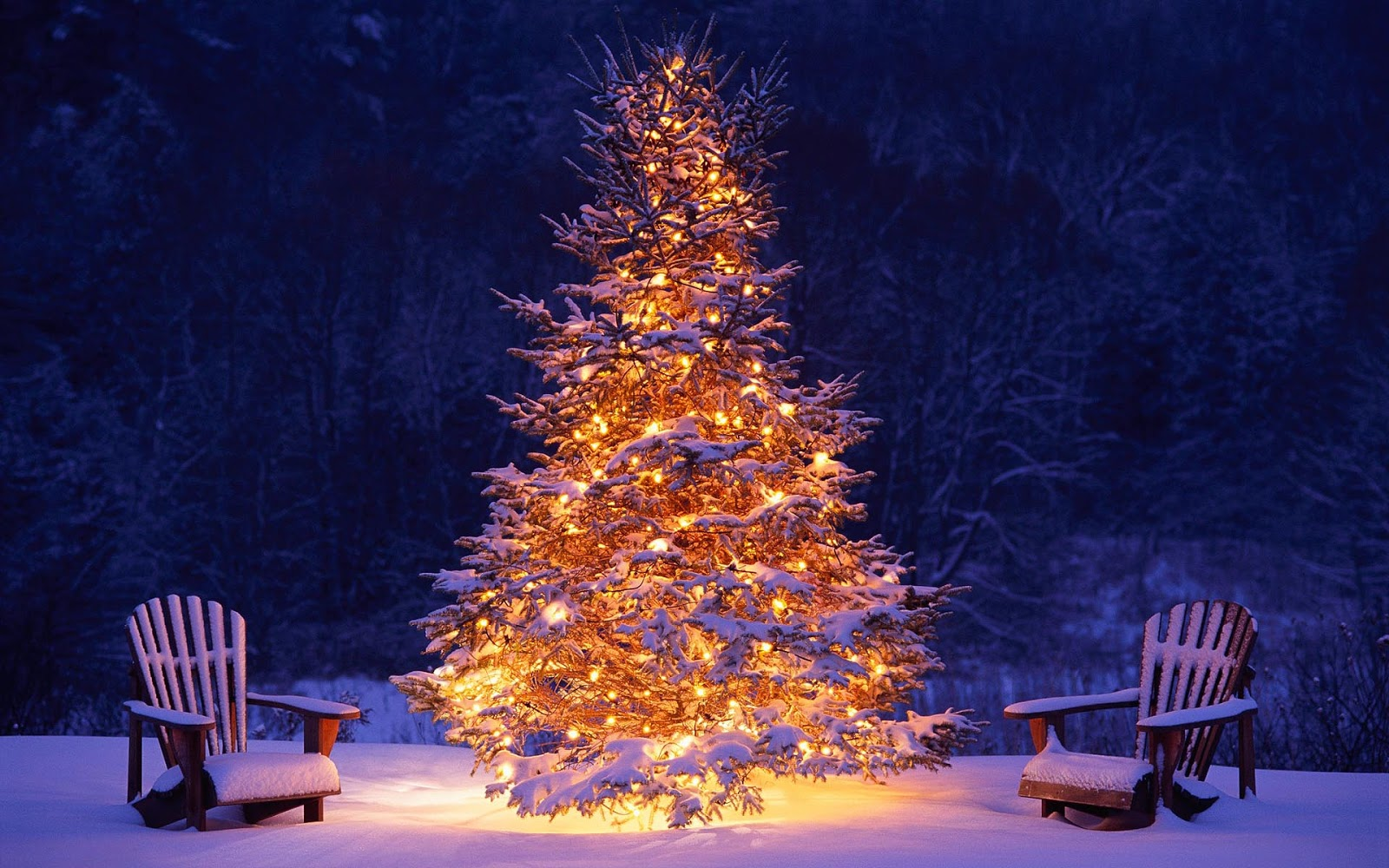 Christmas Tree Outside.Lighted Christmas Trees Outside In The Snow Free Hd