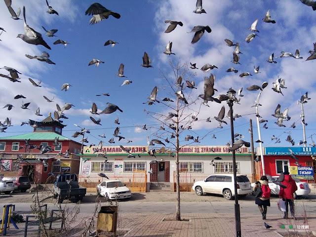[蒙古/烏蘭巴托] 初次體驗 沙發衝浪蒙古包 - 雪原之上,穹頂之下