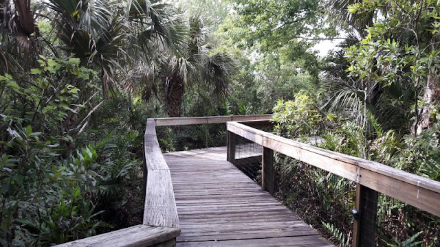 Natural Florida Flora and Habitat
