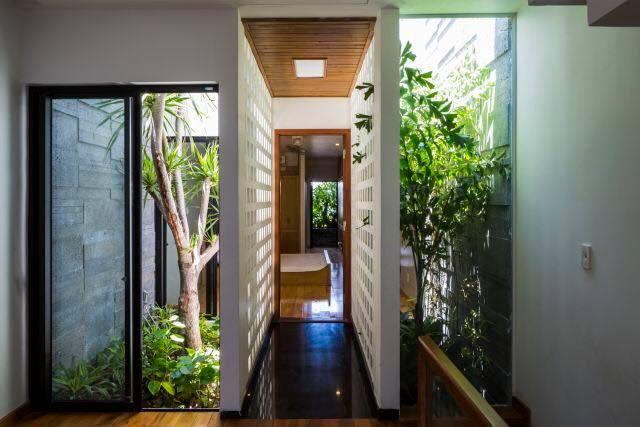 Cây xanh trồng ở giếng trời của ngôi nhà