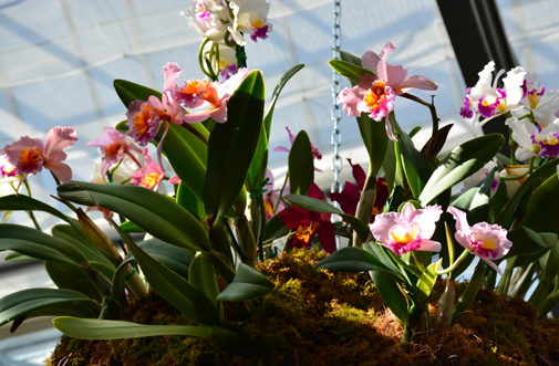 Orchid Daze 2016 | Atlanta Botanical Garden