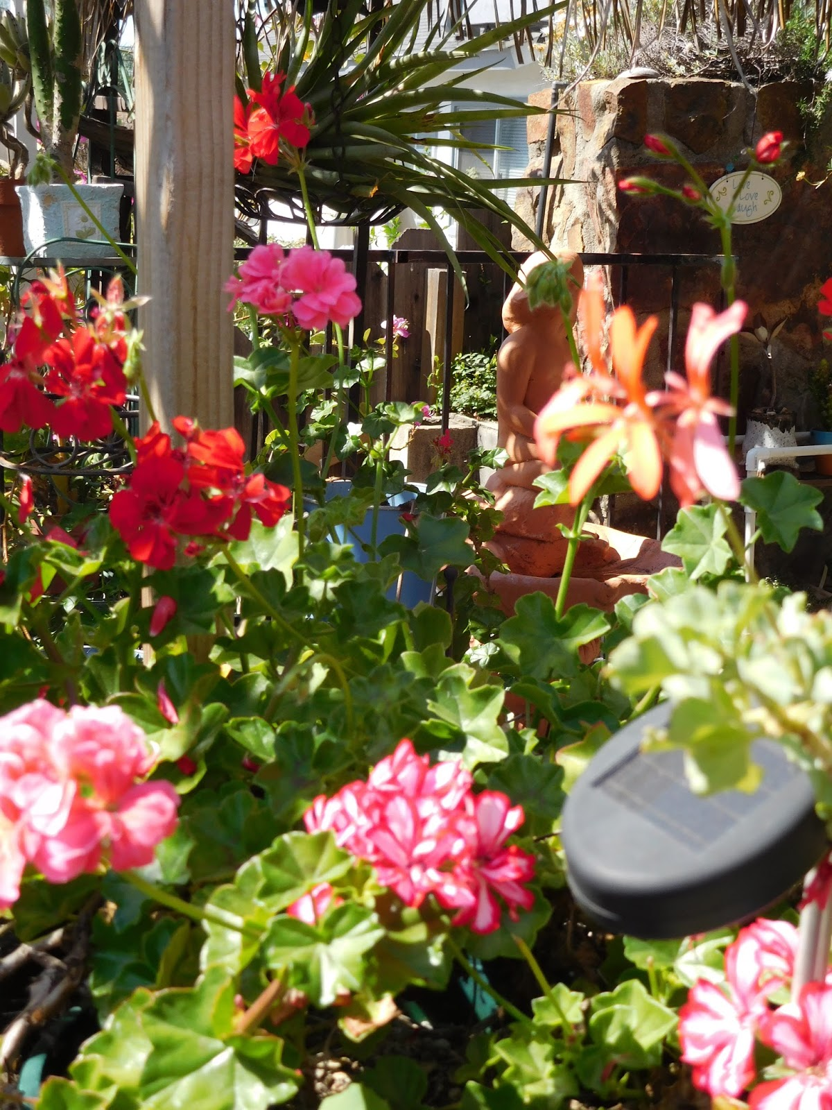 Back To Larkrise Geranium Garden And So Much More