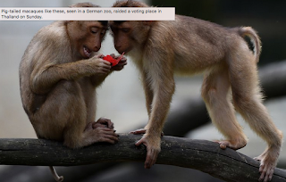 Monkeys Rip Up Voter Lists In Thailand