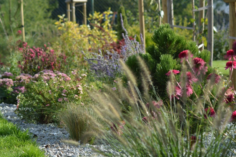 Gramíneas y herbáceas