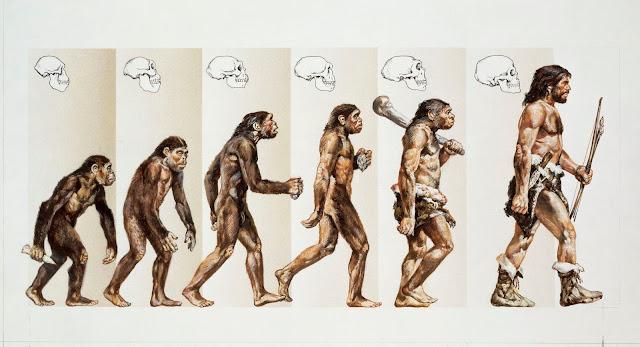 evoluția