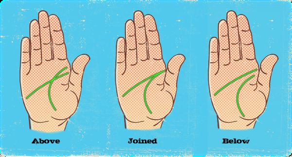 Money Line In Palmistry – Articleblog info