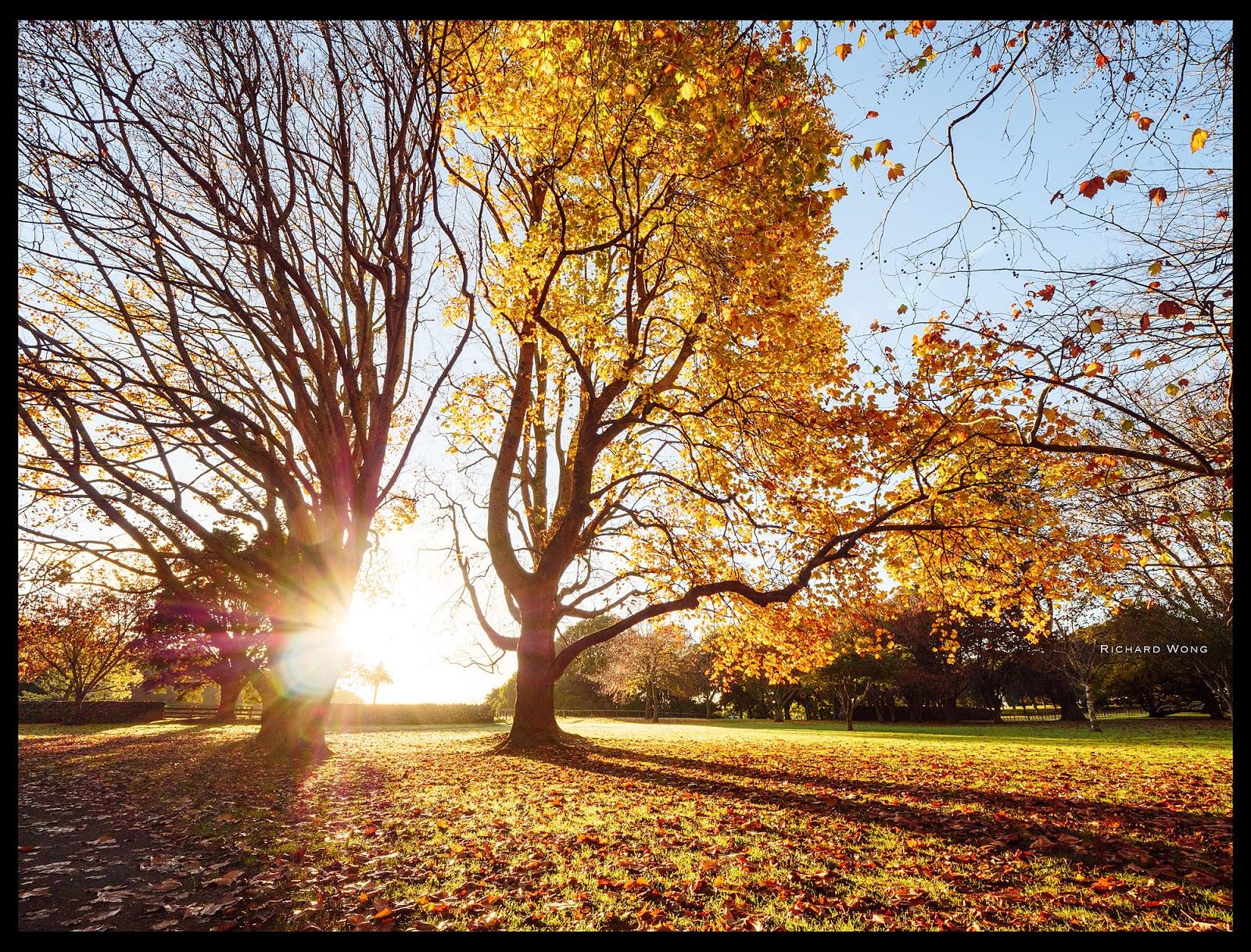 Солнце светит сквозь дерево с облетевшей листвой