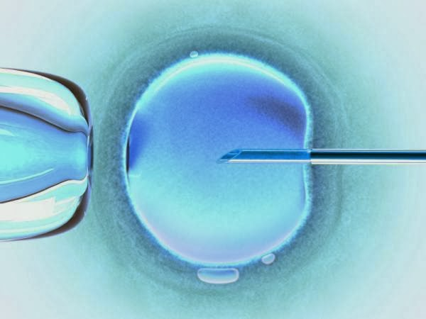 La Fertilización in vitro