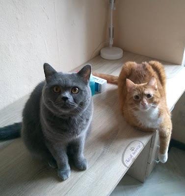 Adzik tworzy - żel Fresh Aid dla kotów test i recenzja