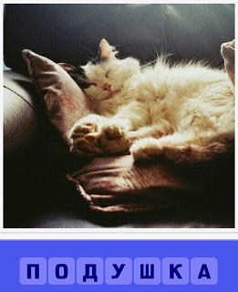 на подушке спит развалившись белая кошка, вытянув лапы
