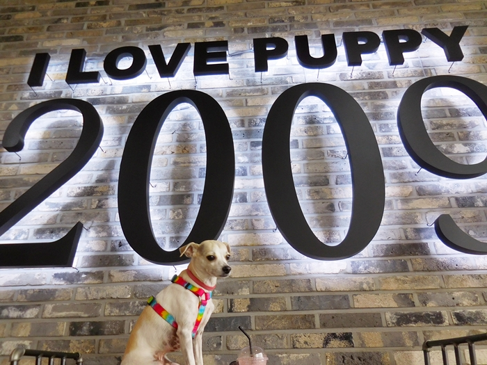 HAPPY GOES TO KOREAN DOG CAFE!