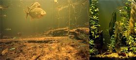 Biotope aqurium water parameter myth