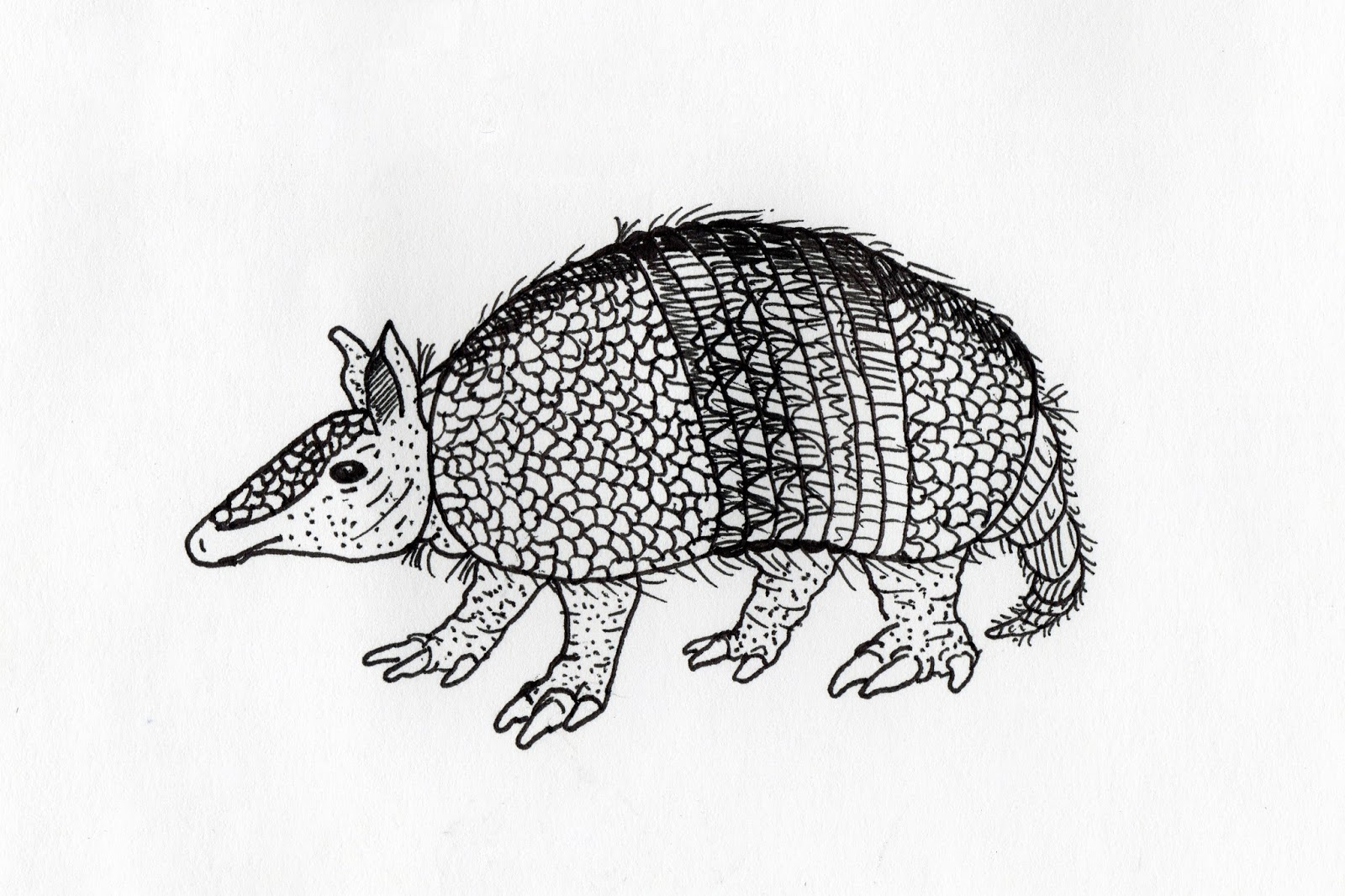how to draw an armadillo # 62