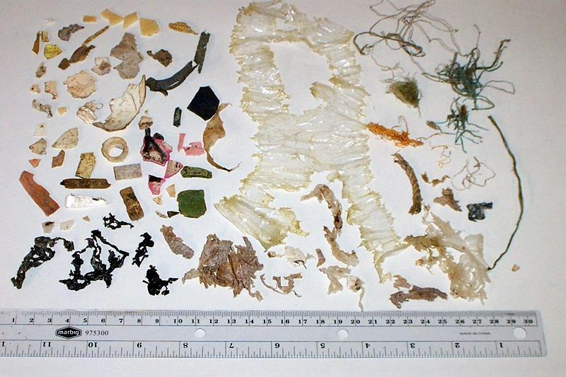 Resíduos retirados do trato digestório de uma tartaruga-marinha. Fragmentos de plástico, em suas diferentes formas, cores e tamanhos compõem o banquete que oferecido diariamente aos animais marinhos da Baixada Santista.
