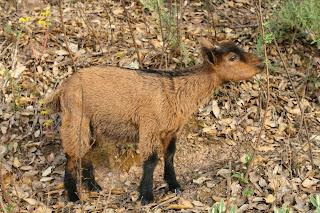 https://www.goatfarming.ooo/2018/08/goat-newborn-and-young-kids-health.html