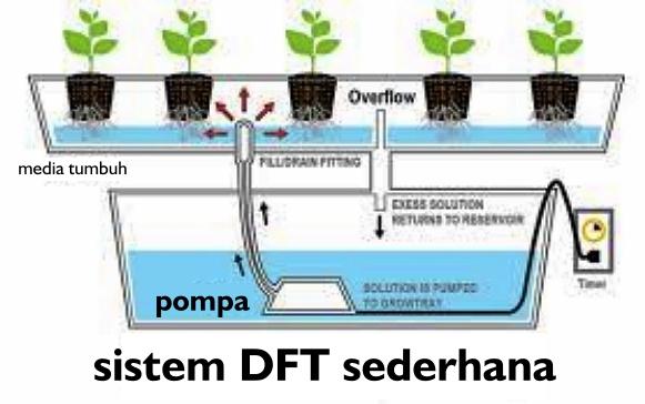 Terbaru 32+ Desain Gambar Budidaya Hidroponik Sistem DFT
