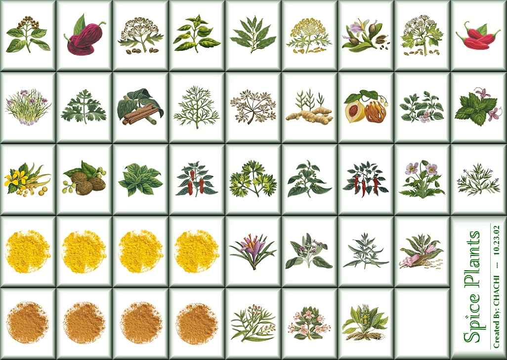 7 Medicinal Herbs and Spices for Tasty Healing