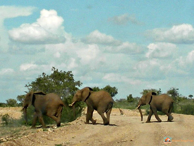 tsavo est, kenya, savana, safari, elefanti in savana